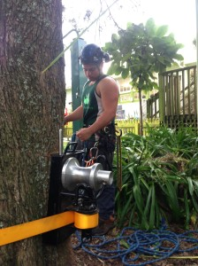 huge tree cutting down auckland tree removals