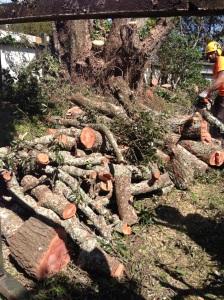 treescape tree cutting tree doctor