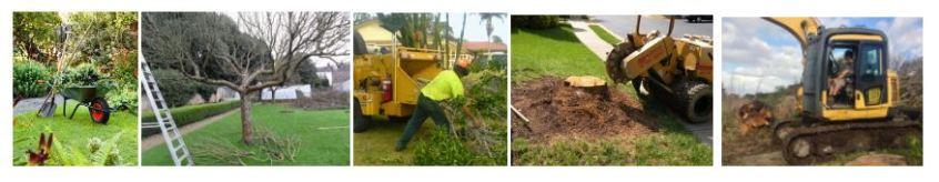 tree works auckland, auckland tree works, arborist auckland