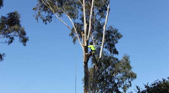 Contac auckland tree removals, arborist auckland, treescape auckland, tree work auckland