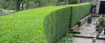hedge triming auckland, hedge work auckland, hedge cutting auckland, tree work auckland