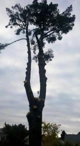 arborist auckland, treework auckland, tree pruning auckland, tree removal