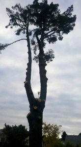 arborist auckland, treework auckland, tree pruning auckland, tree removal