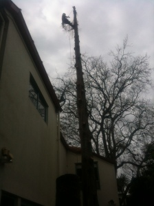 treemagic, tree magic, tree removal, arborist auckland, cut down tree, tree pruning