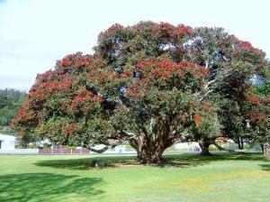 protected tree remova, puhutukawa tree removal