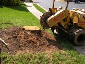 stumpbuster, auckland stump grinding, stump grinding auckland, stump removals auckland, cheap stump grinding auckland
