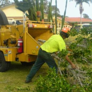 tree chipping auckland, tree mulching auckland, tree work auckland