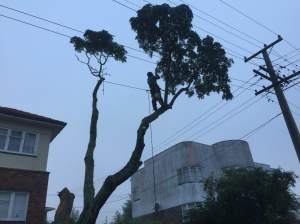 tree works around power lines