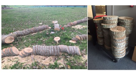 Auckland Tree Removals fire wood wooden plates