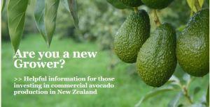 Avocado growing in NZ, avocado tree cutting, avocado tree trimming, avocado tree cutting