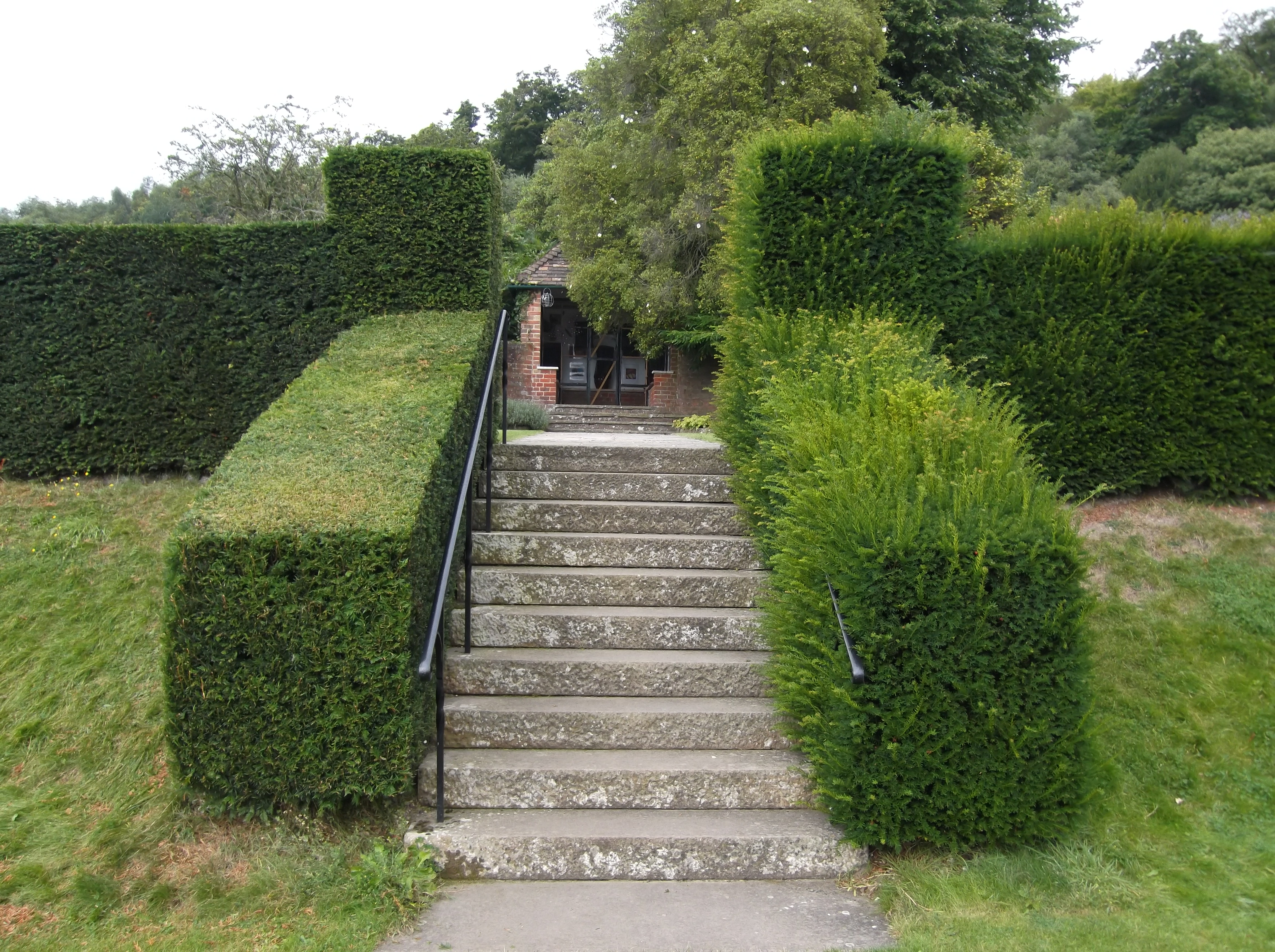 Hedge Bushes: Auckland Arborists And Tree Removals