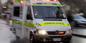 Auckland man killed by falling tree