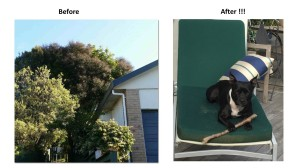 tree works before and after