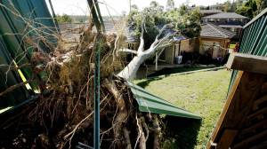 dangerous tree removals auckland