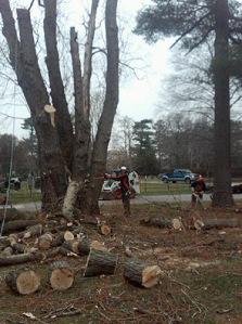 auckland qualified arborist tree work