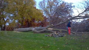 golf course tree removals auckland, golf course tree mantainance