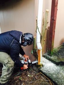 problem tree removals auckland
