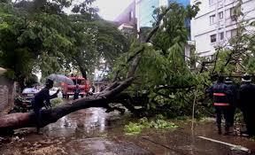 emergency tree job auckland