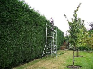 hedge cutting auckland