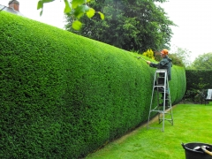 hedge cutting north shore auckland