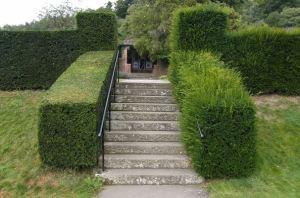 hedge man auckland