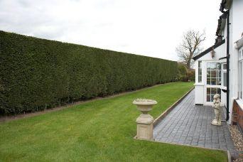 Hedge mantainance