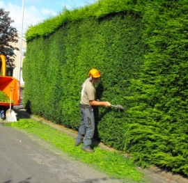 hedge trimming auckland central