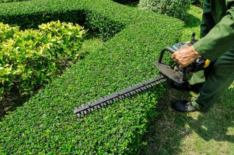 hedge trimming north shore auckland