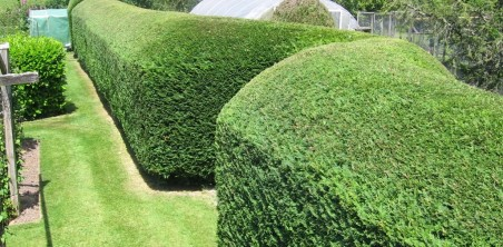 hedge work auckland north shore