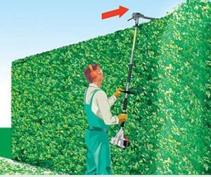 how-to-cut-a-tall-hedge