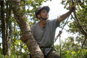 Jono Smith save the kauri tree, auckland tree removals, save the kauri, tree removal auckland