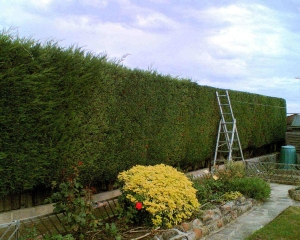 lifestyle block hedge cutting