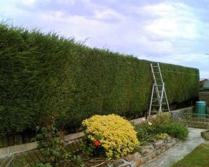 lifestyle block hedge cutting