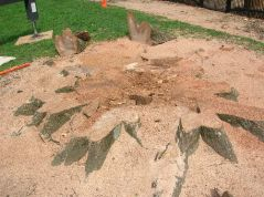stump grinding auckland, stump removals auckland, stumpgriding auckland